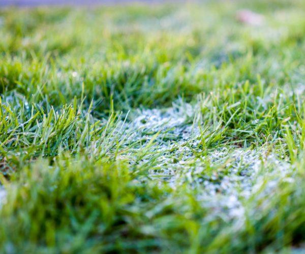 entretenir-sa-pelouse-id2b-paysage-semence