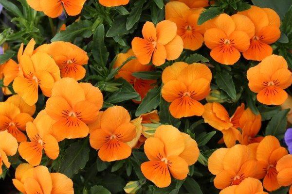 jardin-sans-entretien-id2b-plantes